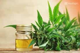 el mejor aceite de marihuana en España