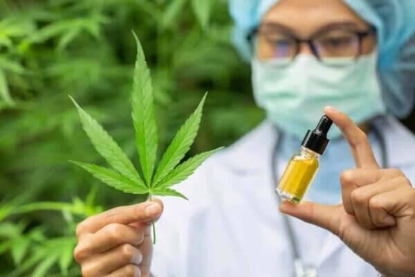 marihuana CBD Oil Medicinal aceites de cannabidiol para hacer cremas y balsamos