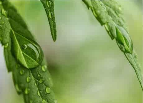 CBD Oil Medicinal aceite de cannabidiol medicinal en farma cbd online