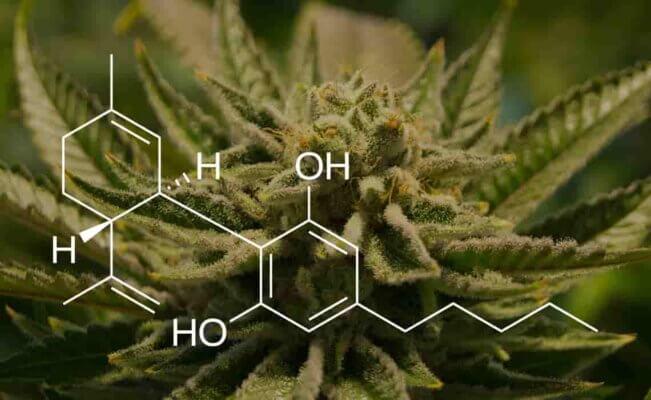 CBD Oil Medicinal el aceite de cbd o hemp oil cañamo elaborado con marihuana medicinal