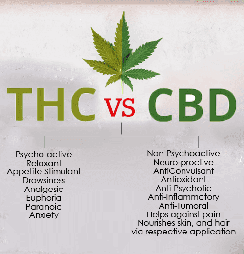 diferencias thc vs cbd cannabidiol medicinal tienda cbd