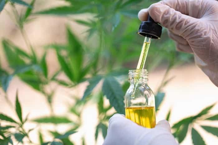 pierde peso con el cbd reduce tallas cannabis medicinal