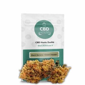 Flores-CBD-House-Bubbakush-the-cbd-house-comprar-online