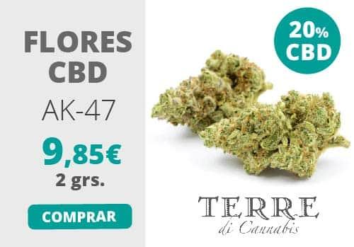 comprar cogollos de marihuana cbd