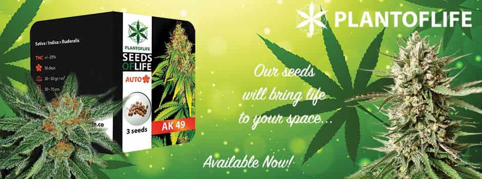 compra online Plant of Life